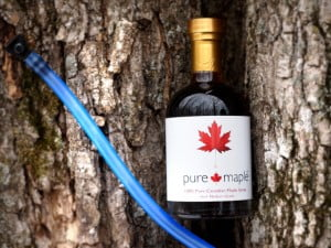 pure-maple-bottle